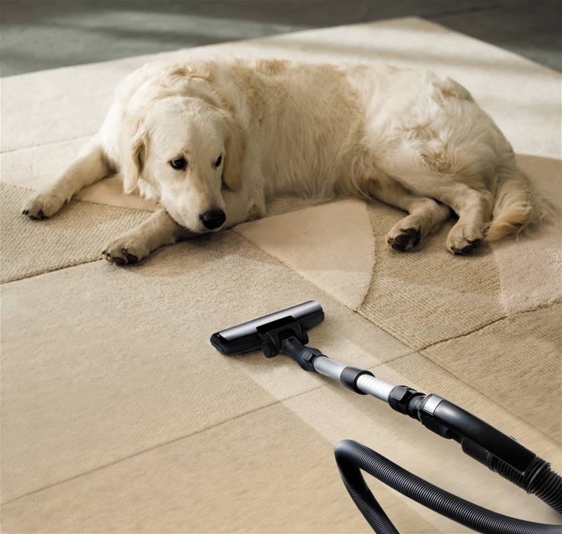 dog lying in the carpet